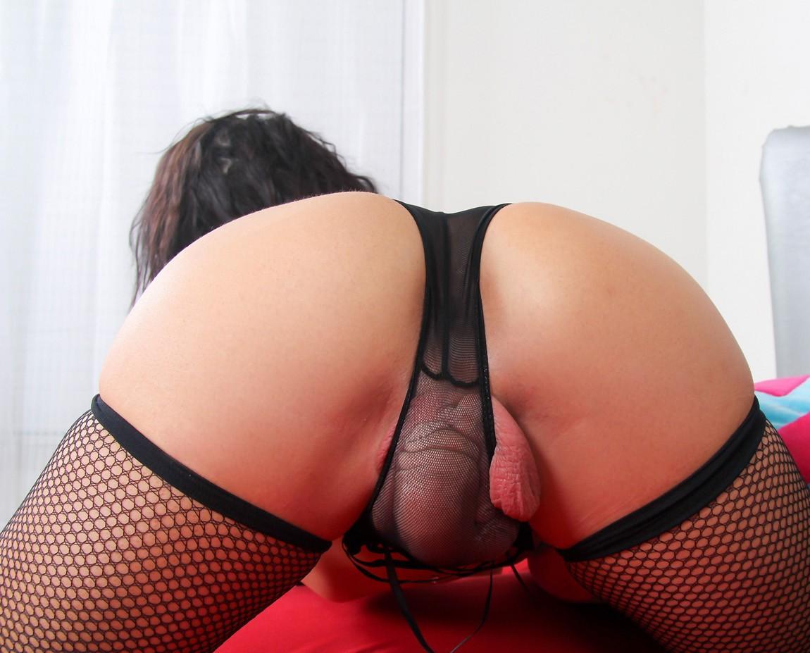 Shemale panty webcams galery